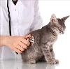 Ветеринарные клиники в Арти